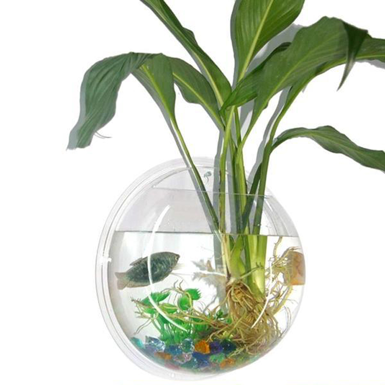 Acrylic wall mount hanging fish bowl aquarium tank beta for Beta fish bowl