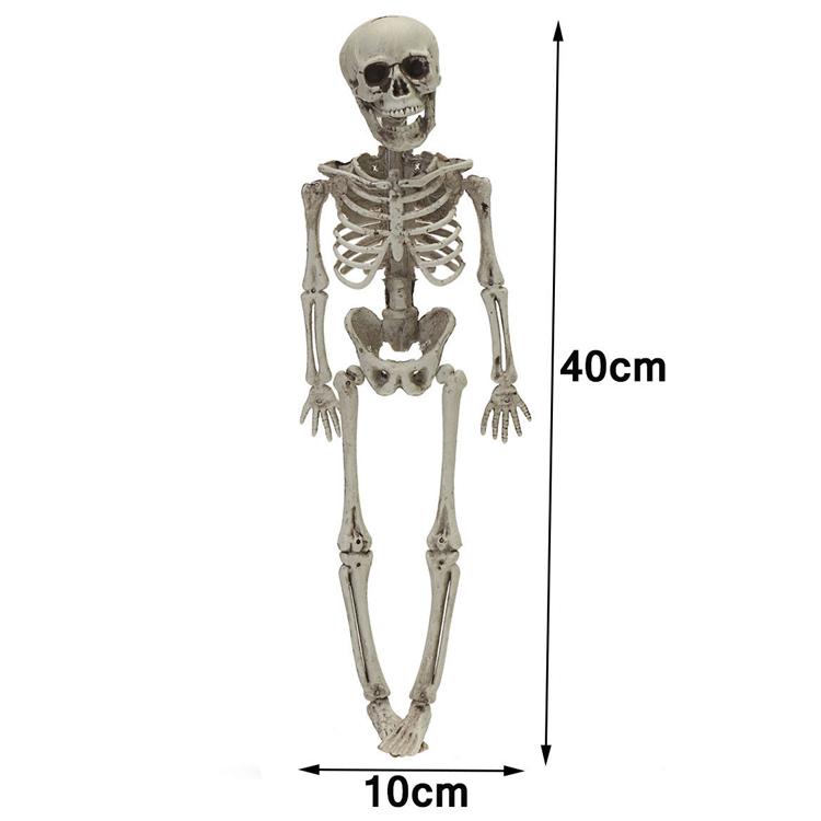 Human Skeleton Bones Real Life Size Hanging Halloween